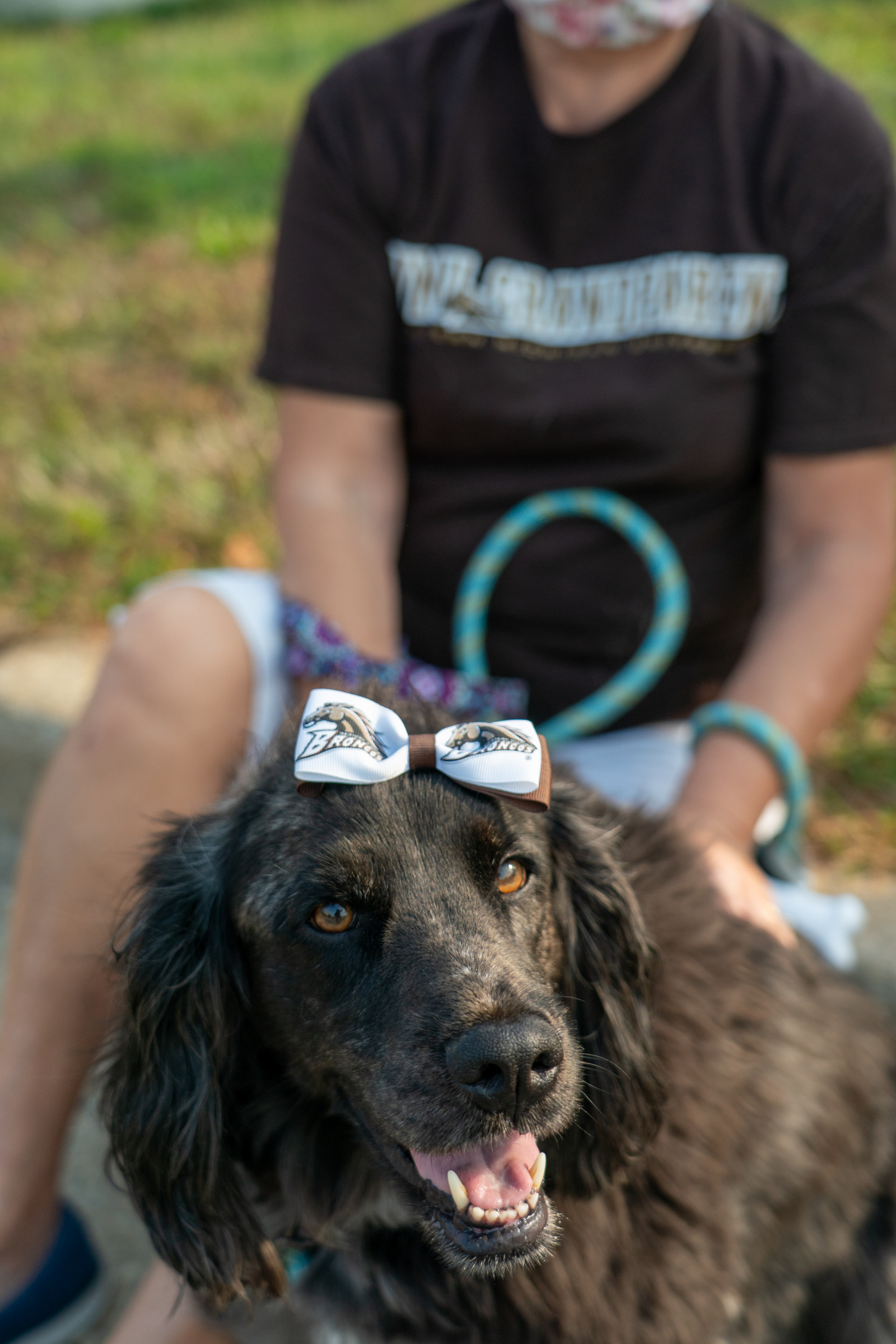 A dog wears a Bronco bow on its head.