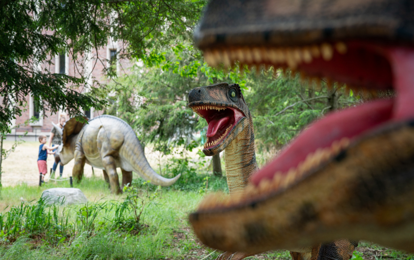 A photo of a utahraptor taken through the jaws of another dinosaur.