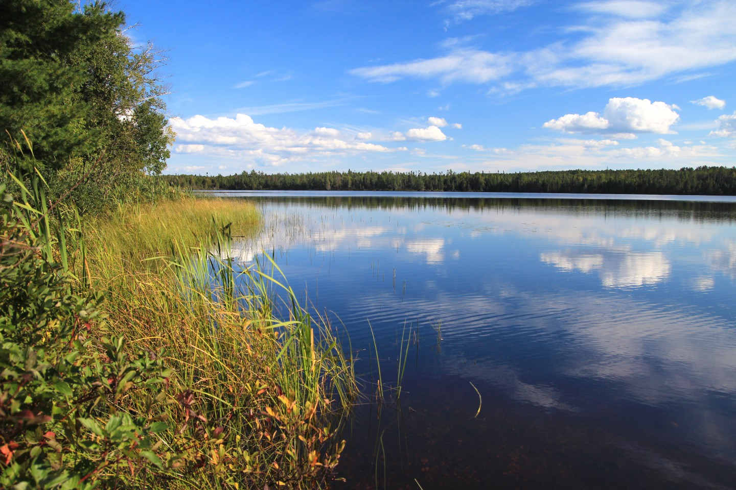 A landscape photo featuring vegetation next to a body of water.