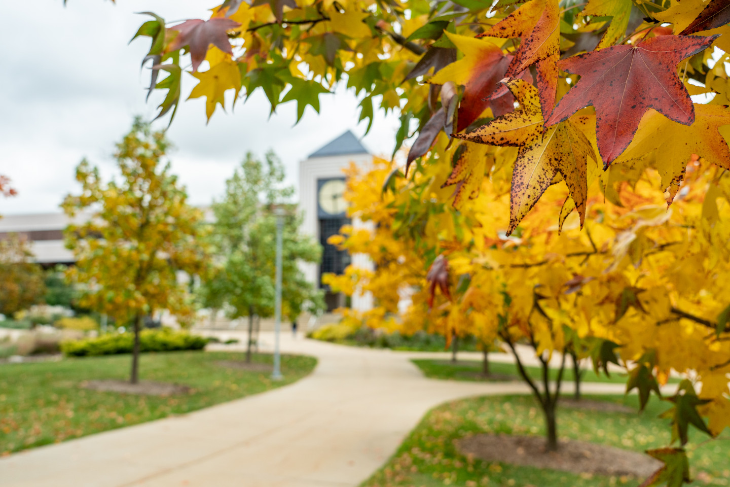 Photo of fall leaves on trees outside on campus.