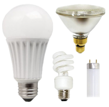 lightbulbs of assorted shapes