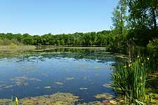 Photo of Asylum Lake Preserve.