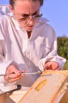 Photo of a beekeeper looking at a frame filled with honey.