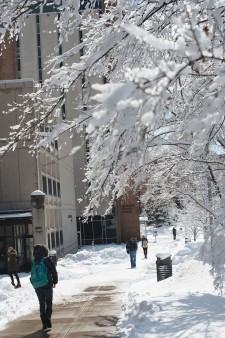 Photo of students walking down a partially snow-covered sidewalk that is lined on one side by a row of snow-covered trees.