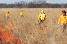 Flames burn through a section of prairie grass under the watchful eyes of four people wearing protective clothing.
