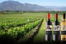 Wine bottles against backdrop of Chilean vineyard.