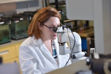 A biologist looks into a microscope.