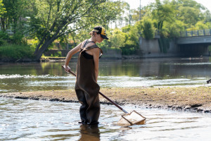A student uses a net in the Kalamazoo river.
