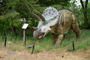 A triceratops statue.