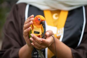 Aisha Thaj holds her pet bird in her hand.