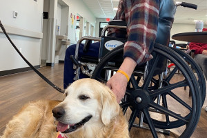 Therapy dog with man in wheelchair