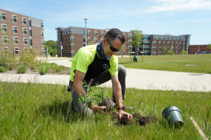A WMU employee plants a seedling in the grass on campus.