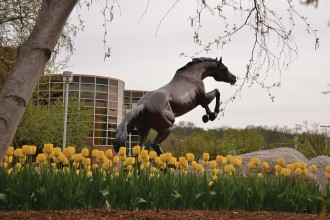 Bronco statue with yellow tulips outside.