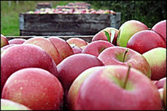 Photo of bushels of apples.
