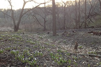 Photo of spring flowers in bloom at Kleinstuck Preserve.