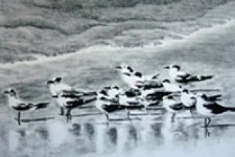 Photo of charcoal drawing of shore birds.