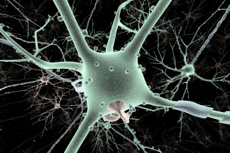 Photo of a neuron.