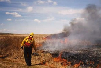Photo of a prescribed burn in progress.