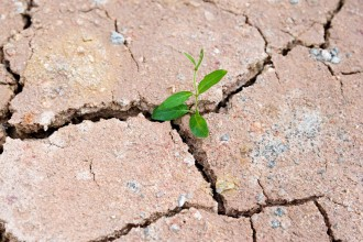 Photo of a seedling growing out of dry ground.