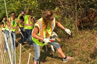 Photo of a line of students wearing gloves and protective eyewear and cutting brush with hand-held pruning saws as they work their way up a steep slope.