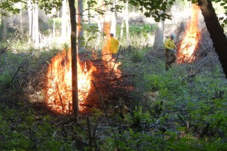 A clearing in the woods with workers in yellow shirts standing next to burning piles of brush.