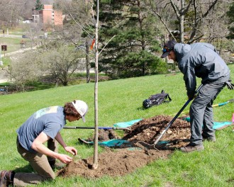 Mitchell and Gooch finish planting a whip by adding fresh mulch.