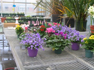 Flowering plants in the Finch Greenhouse
