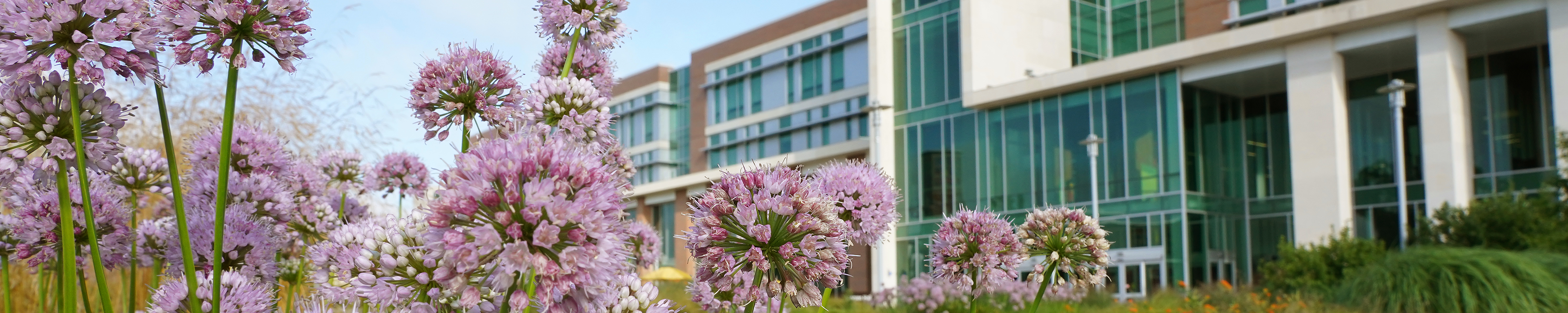 Page banner: Scenic view of Sangren Hall on WMU campus