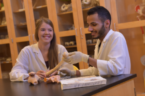 Two students working with a skeleton bone in a laboratory setting