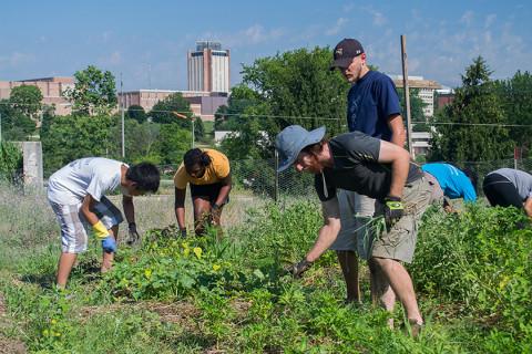 Students working in community garden
