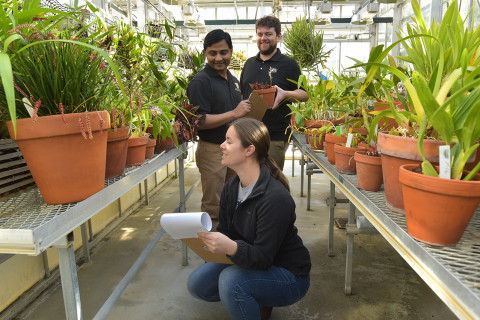 This image shows three students doing research in a greenhouse full of potted green plants.  A woman crouches down to inspect a plant in the front. She is holding a large pad of note paper, two men are in the background also inspecting plants with notepads of paper.