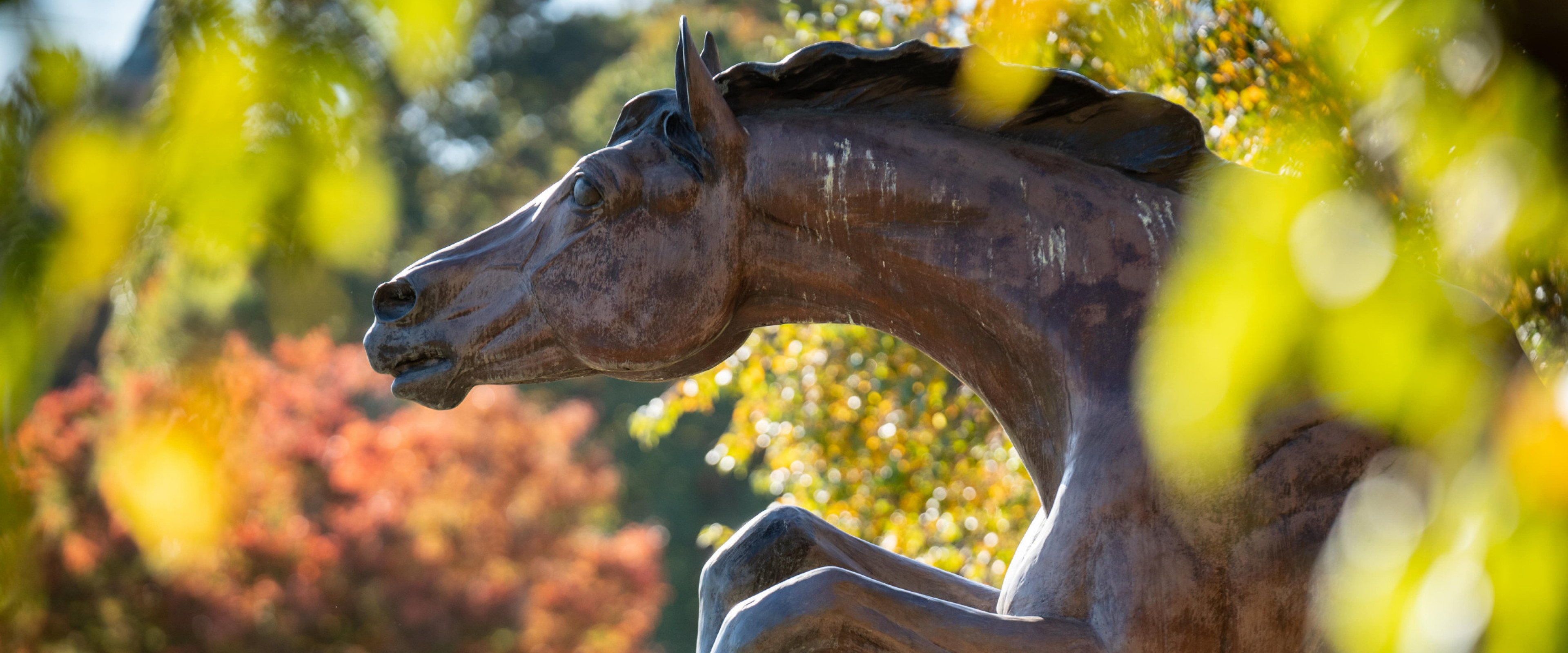 Bronco statue in the fall