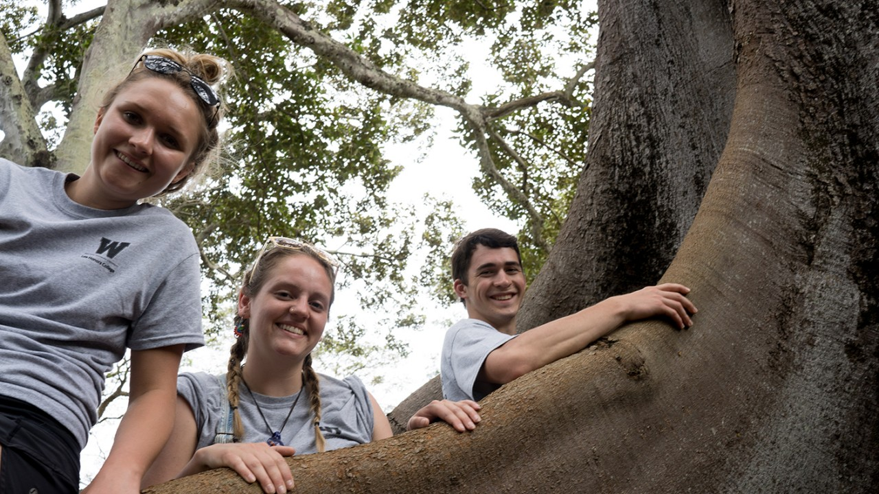 Three students look down from their perch in a tree in Hawaii.