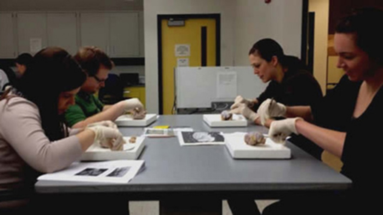 Students dissecting brains