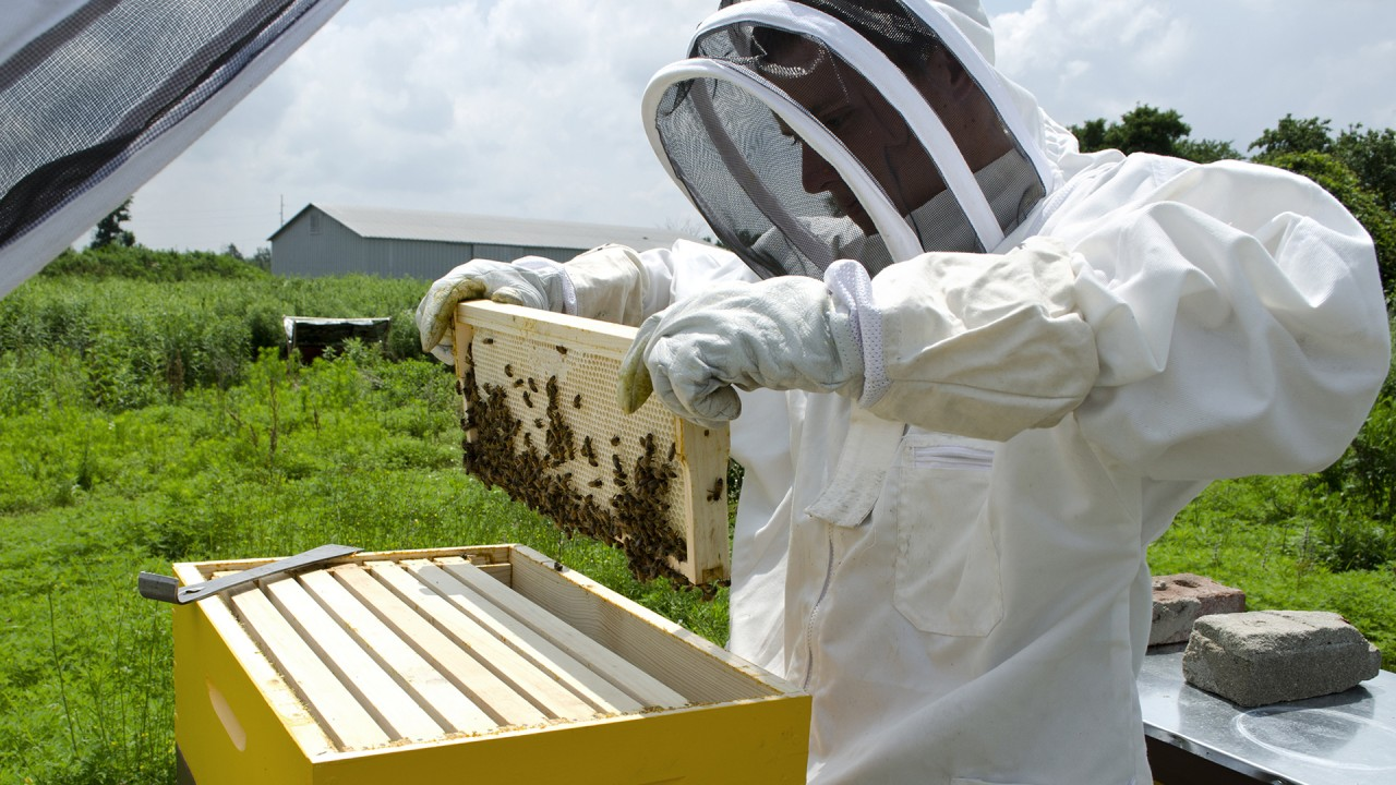 ssg honey bees
