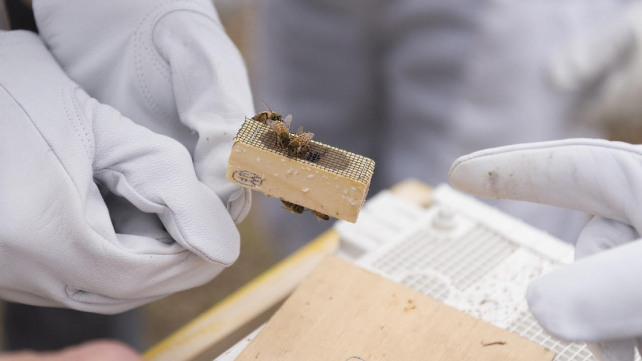 students holding bees on honeycomb