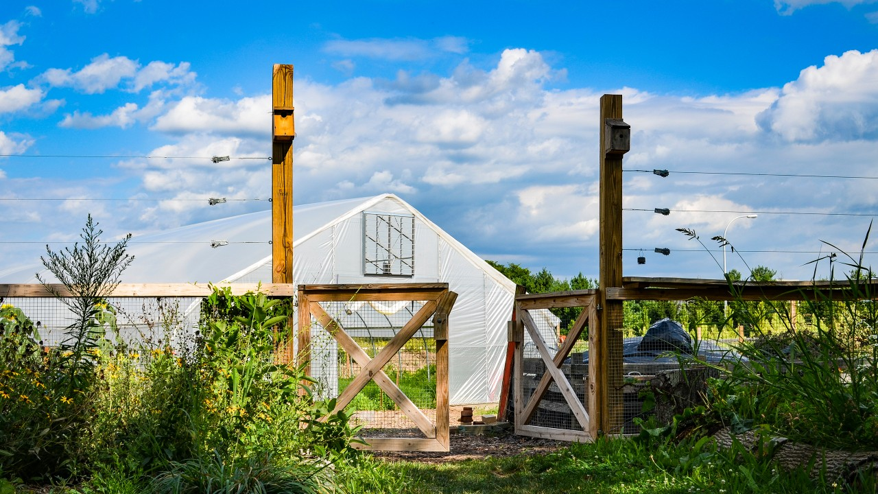 photo of hoophouse at Gibbs site on a sunny day.