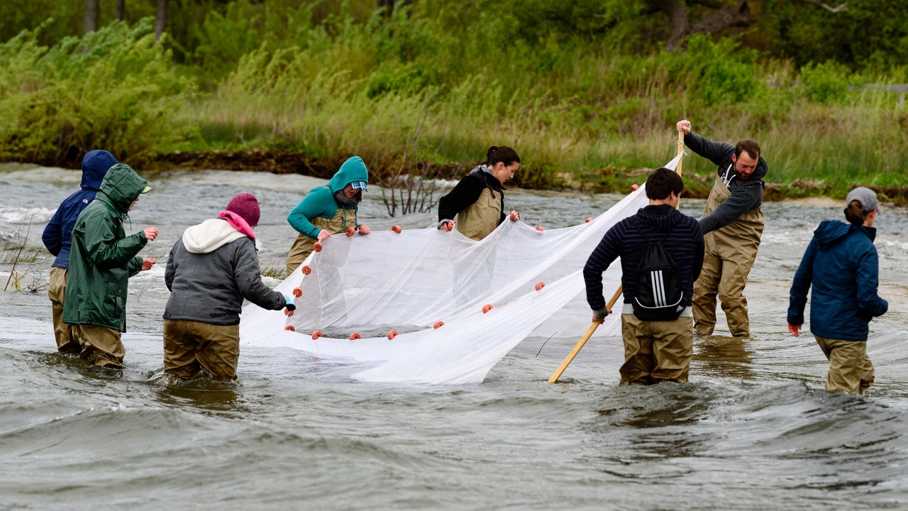 Group of students picking up a big net out of the water