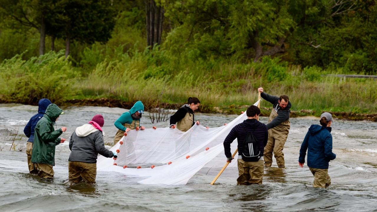 Students in a river hoisting up a trawl