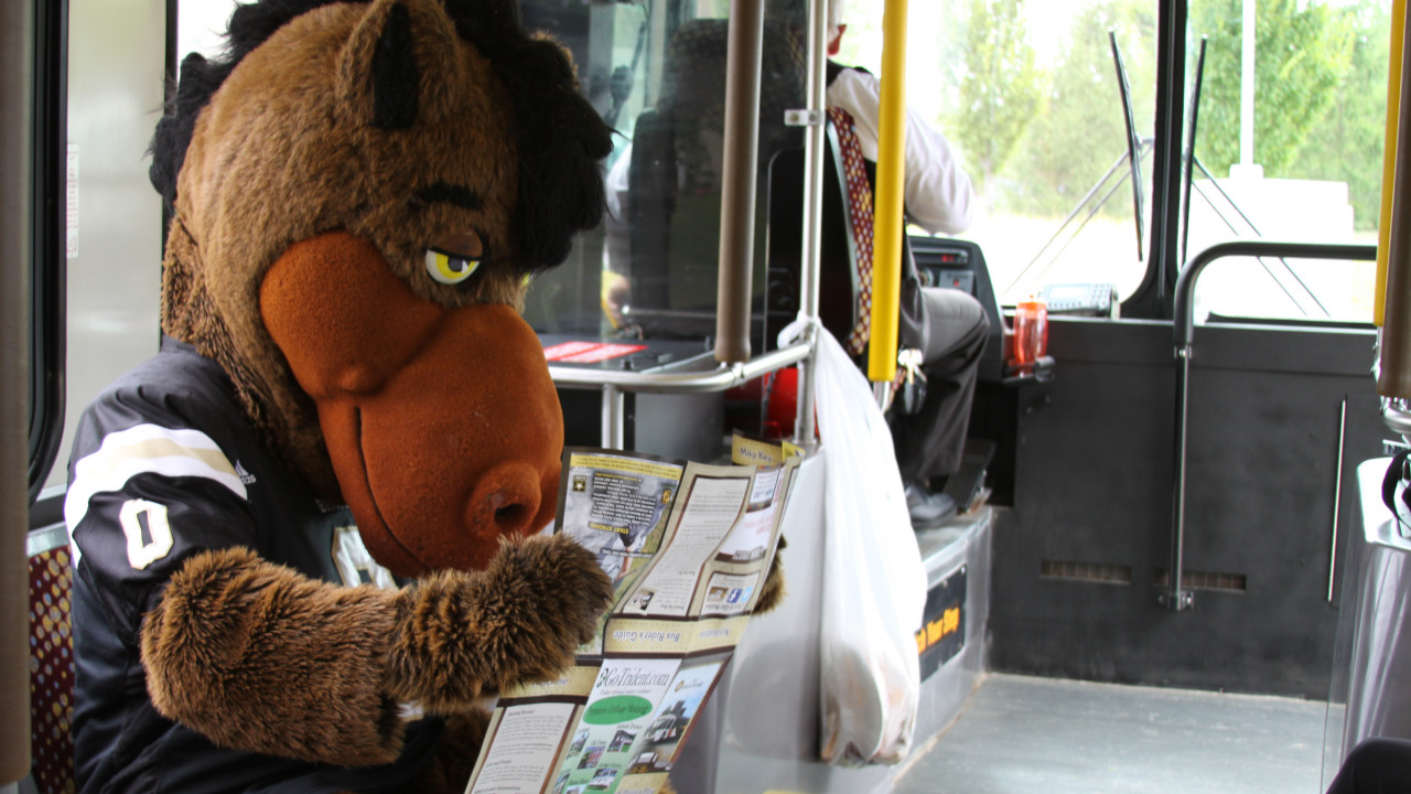 Bronco reading a bus route map