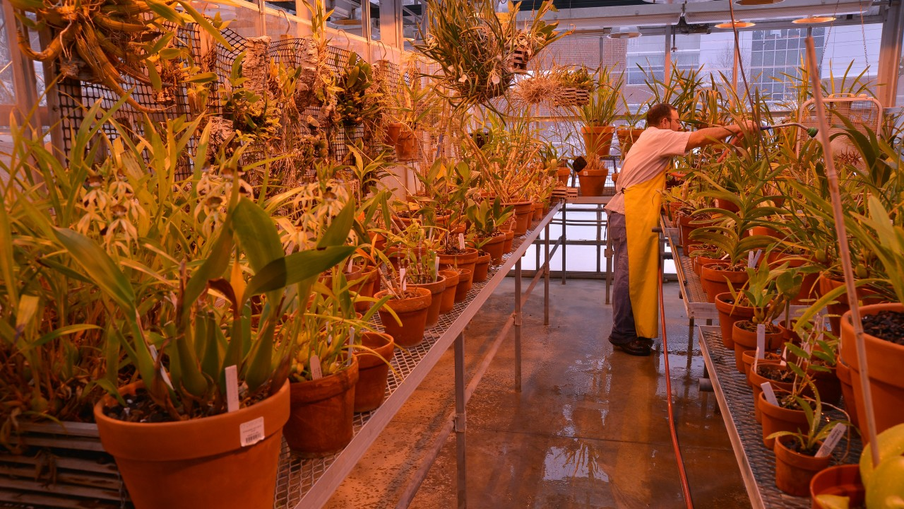 Staff in greenhouse