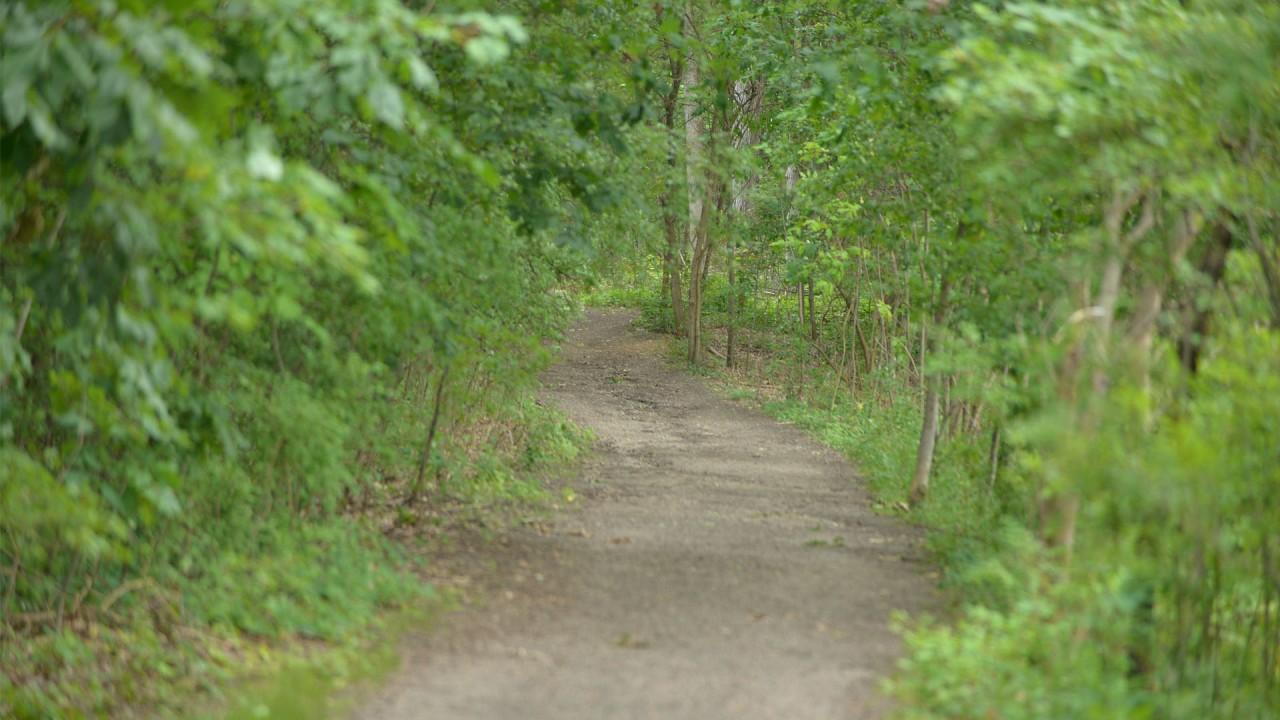 Asylum Lake path through wooded area