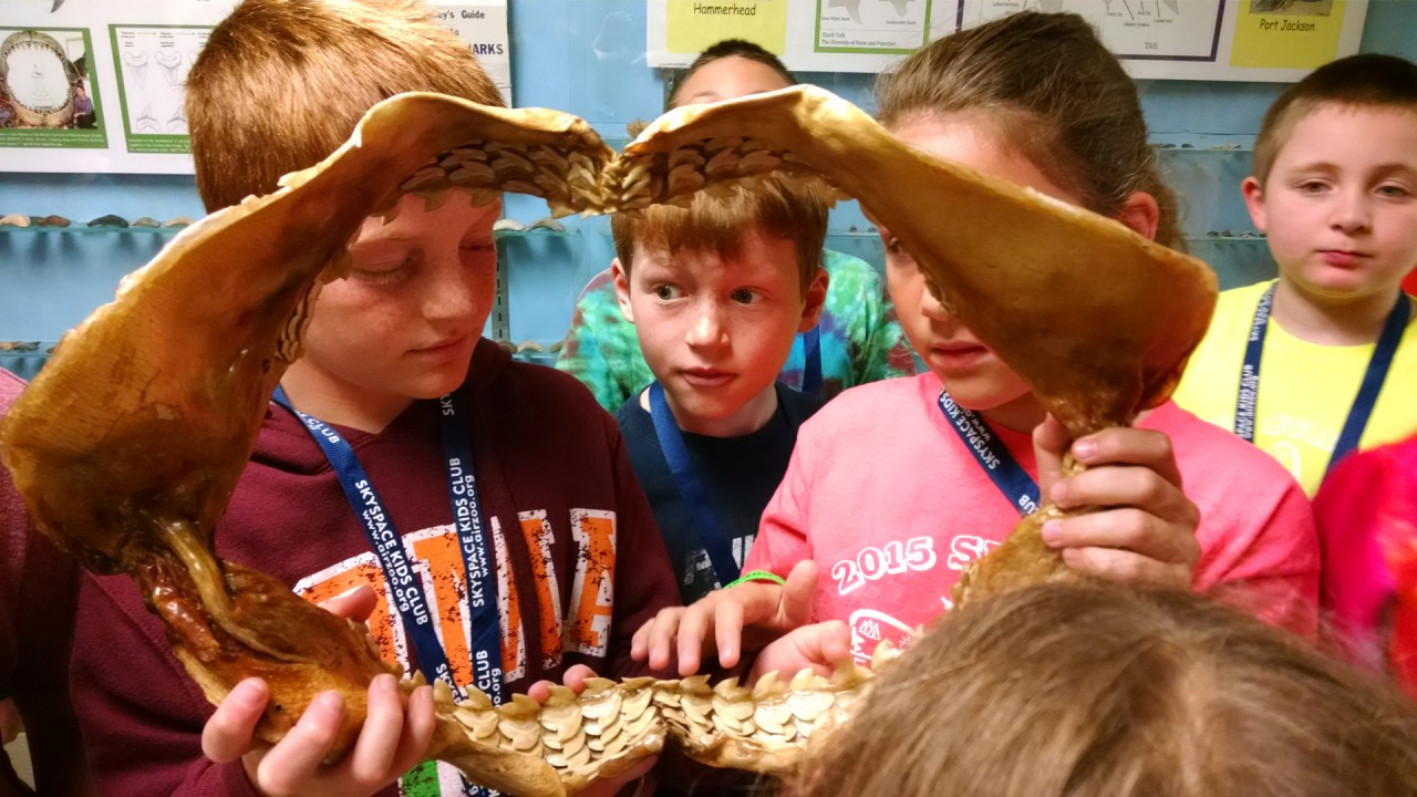 Young students examine a shark jaw