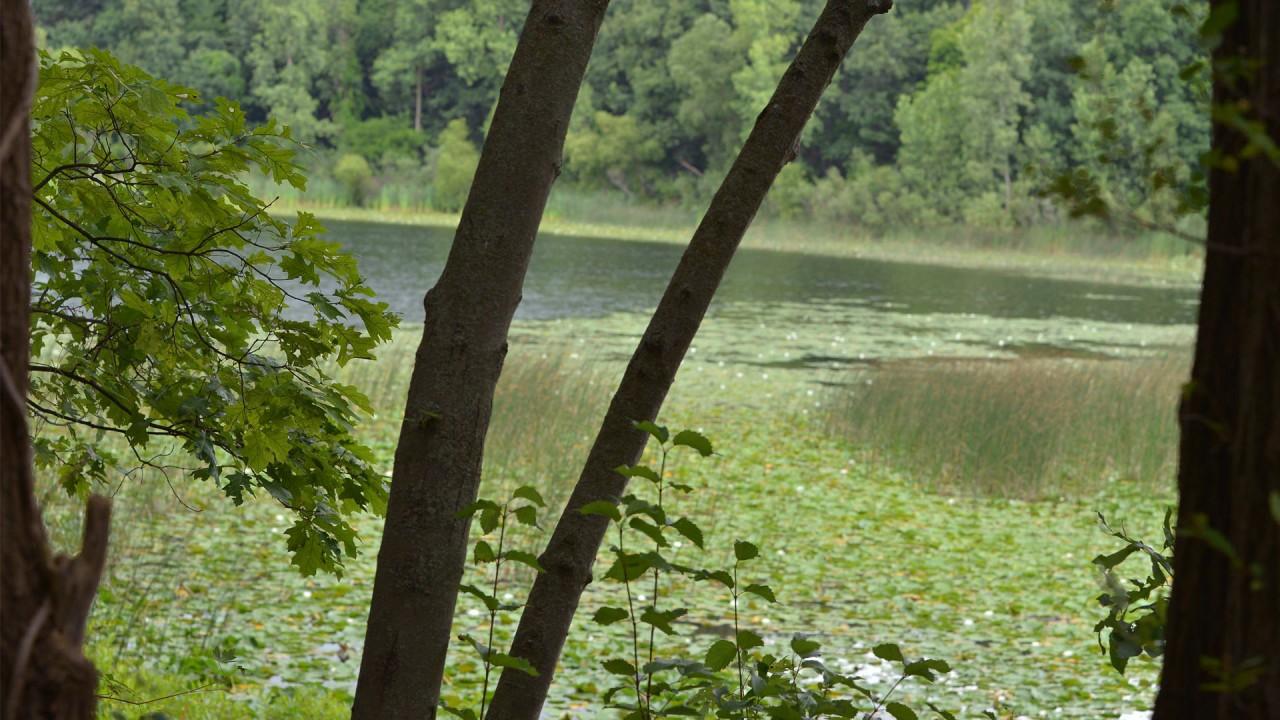 Photograph of the Asylum Lake Preserve