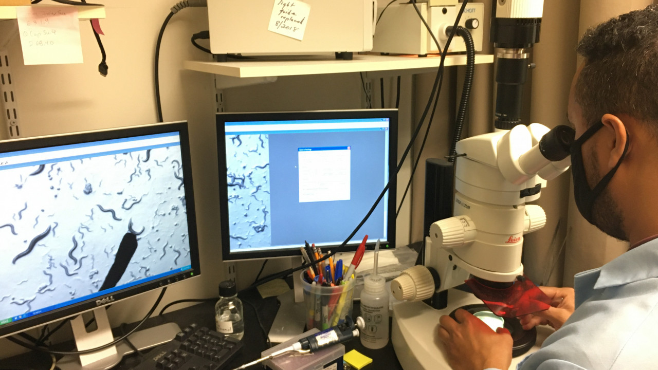 student uses microscope