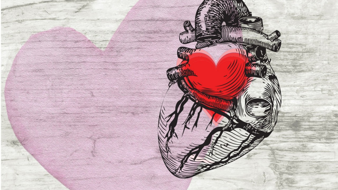 Illustration of human heart with a Valentine heart graphic inside of it on a white painted wood background and a watercolor Valentine heart on top of painted wood