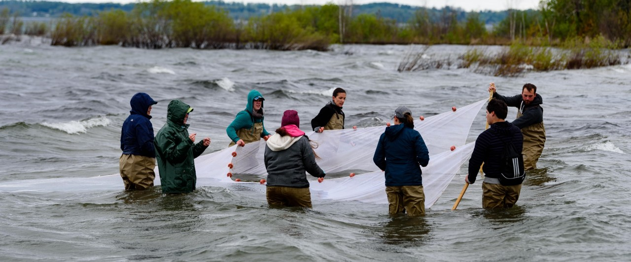 Students in river with net