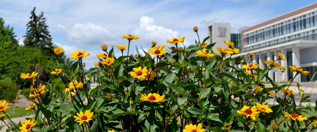 Photo of brown-eyed Susans with Sangren Hall in the background.