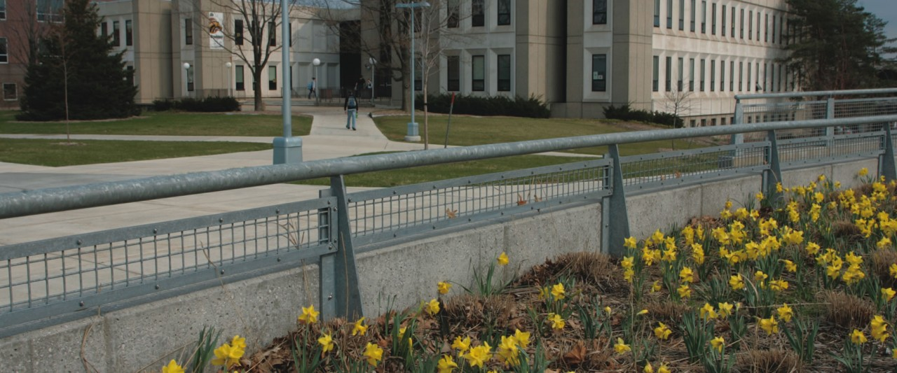Faunce Student Services building with dafodils
