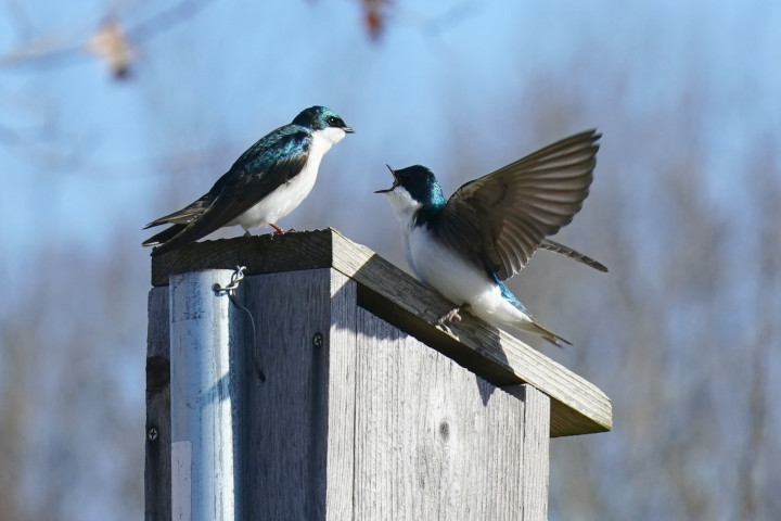 Two birds on top of bird house